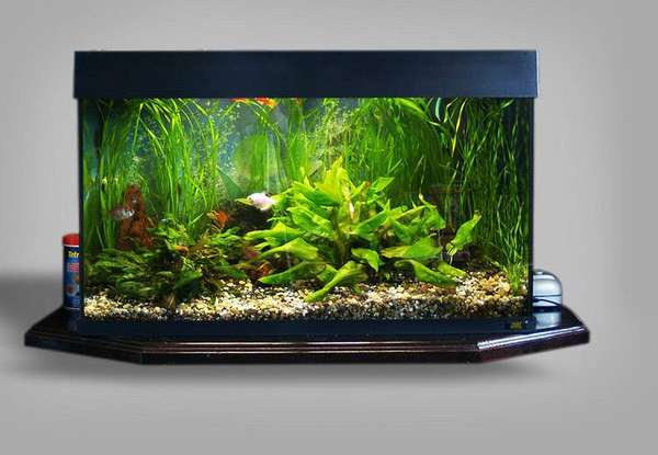 Хорошим и красивым решением будет использование аквариума