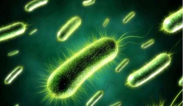 Аэробные бактерии, обеспечивающие разложение канализационных масс