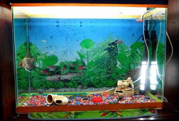 А это аквариум именно для детской
