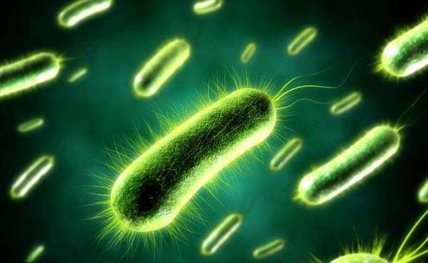 Внешний вид аэробных бактерий для септиков