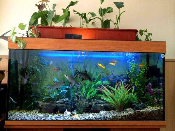 А на этом доме для рыбок установлен элементарный фитофильтр