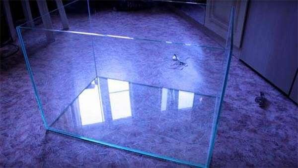 Насколько сложно сделать своими руками аквариум из стекла и что для этого потребуется