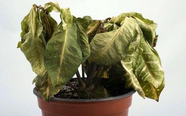 Растения засыхают при недостатке влаги
