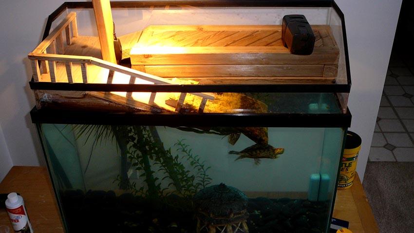 Ведь это чудо, а не аквариум